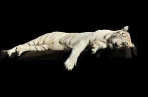 世界睡眠日:关注和提高睡眠质量 多睡一小时