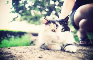 为何孤独的人爱养猫?