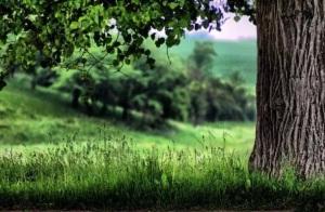 欲为大树,莫与草争(婚姻教育很好的启示)