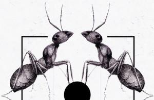 成功的秘诀——两只蚂蚁的故事
