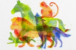 测一测潜意识里你是哪种动物?丨内在动物原型测试