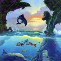 几只海豚?
