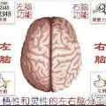 大脑左右半球优势
